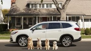 Subaru now offers pet accessories for a more dog- and cat-friendly car